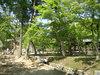 kyoto2005_02