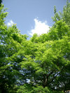 kyoto2005_03